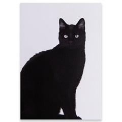 Placa Decorativa em Madeira Animals 29x20cm Gato - Casa Etna