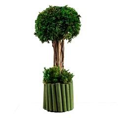 Planta Nanc Bambu 22cm Verde - Casa Etna