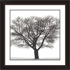 Quadro em Mdf Árvore 29x29cm - Euroquadros