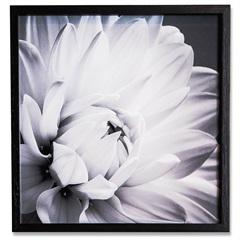 Quadro Floral 5 39cm - Casa Etna