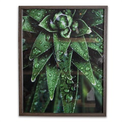 Quadro Tropically Green 2 50x40cm - Casa Etna