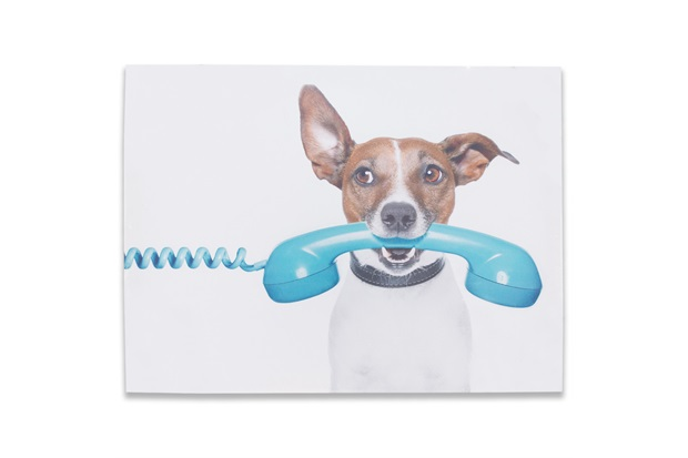 Quadro em Mdf Pets Telefone 42x32cm - Importado