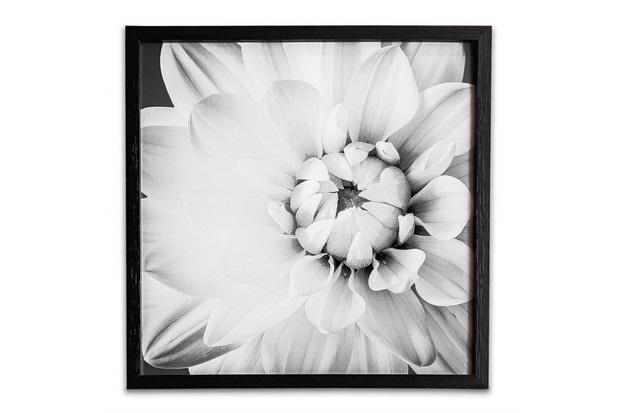 Quadro Floral 6 39cm - Casa Etna