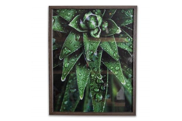 Quadro Tropically Green 2 50x40cm - Casa Etna